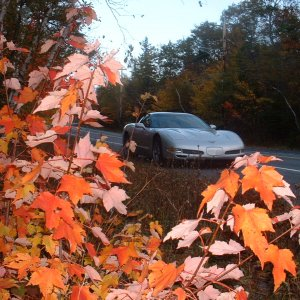 Fall Day -03-z06